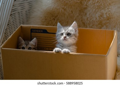 Close up of cute kitten sit in paper box and waiting for someone.