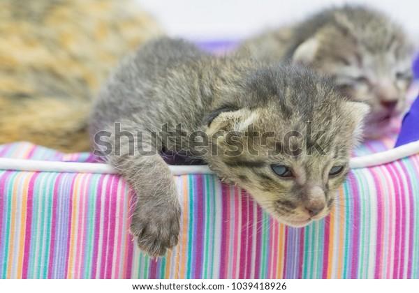 close up cute little cat sleeping