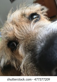 Close up of cute puppy's face