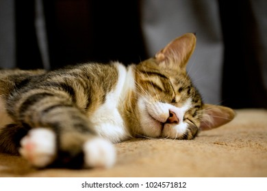 close up of cute sleeping cat, defocused, selective focus, blurred background