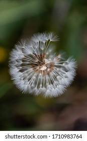 Close up of dandelion flowers on blurred background - Shutterstock ID 1710983764