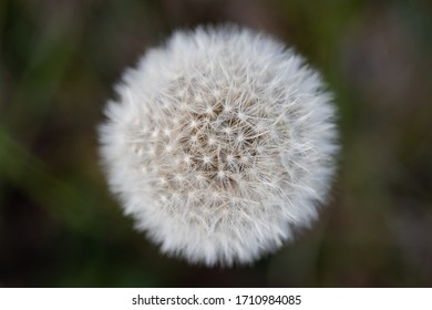 Close up of dandelion flowers on blurred background - Shutterstock ID 1710984085