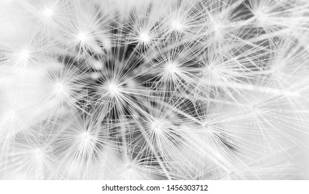 Close up of dandelion seeds, Wireframe light connection structure concept.