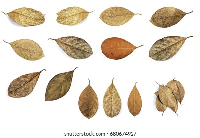 Close up dead leaf isolated on white background