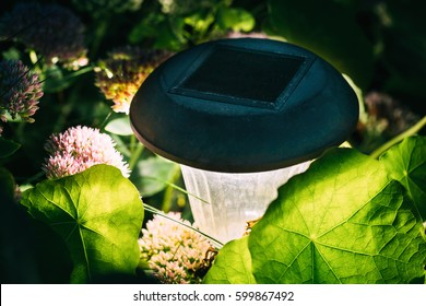 Close Up Decorative Small Solar Garden Light, Lanterns In Flower Bed. Garden Design. Solar Powered Lamp