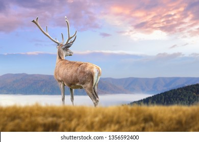 Close up deer on mountain background with clouds in spring time