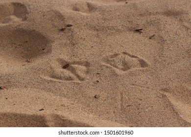 Close up of delicate seagull footprints in the sand at a Devon beach