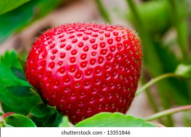 Close up of a delicious strawberry