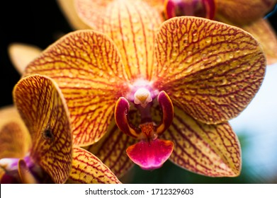 Close up of Dendrobium orchid flower color pattern with bid and blurred background