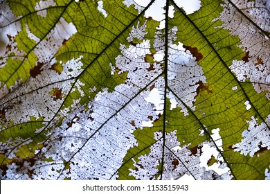 Close up detail of brown dry leaf texture background.