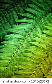 Close up detail of green fern leaves under soft light