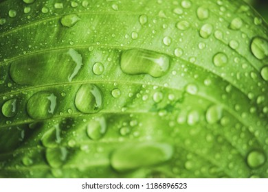 Close up detail of green leaf with water drops. Beautiful leaf texture in nature. Natural background