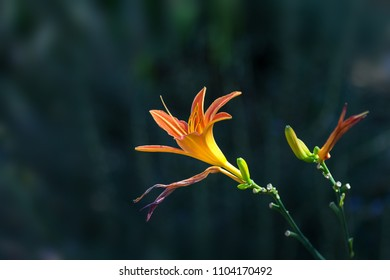 close up detail of an orange lilly flower blossom against a mottled background