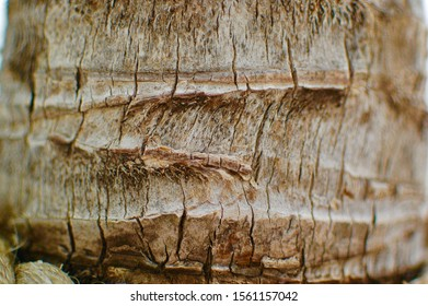 Close up detail of palm tree bark