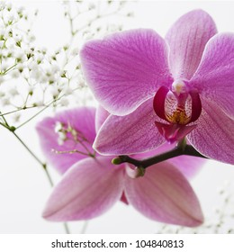 Close up detail of pink orchids with white flowers detail on a plain background.