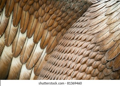 Close up detail of a statue's eagle feathers