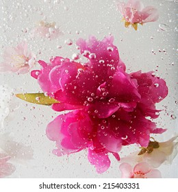 Close up detail view of bubbles and liquid water with white and bright pink flowers submerging under water creating bubbles. Health spa dreamy inspirational artistic floral background texture.