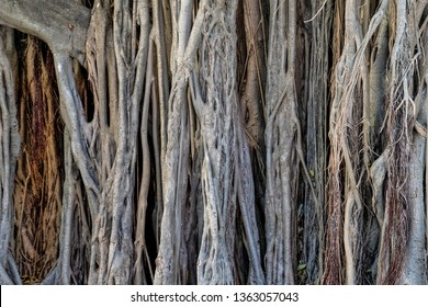 close up of detailed pattern of a banyan tree trunk