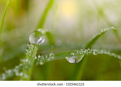 close up dew drop photo.