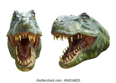 close up dinosaur on white background
