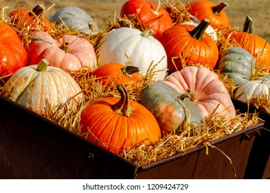 Close up display of colorful pumpkins sitting in hay on sunny autumn morning