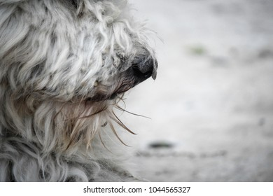 Close up of dog