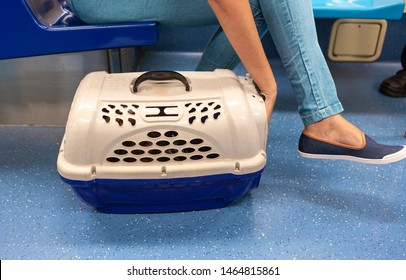 Close up of dog / cat (inside pet carrier) being transported by an unknown woman (not shown on scene) in public transport, subway. Girl's arm calming the pet. Pet care and animal welfare concept.