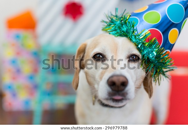 Close up of dog celebrating his birthday party