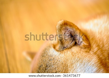 Close Dog Ears Stock Photo Edit Now 361473677 Shutterstock