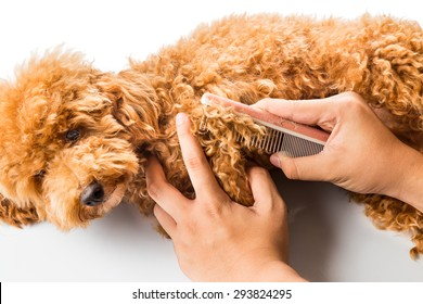 Close up of dog fur combing and de-tangling during grooming