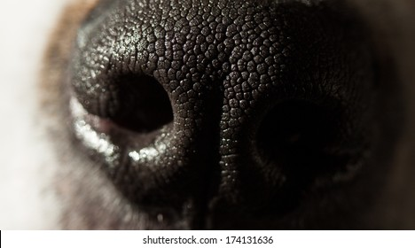 A close up of a dogs black nose in deep shadow.