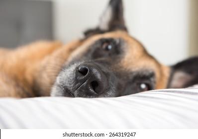 Close up of Dog's Nose