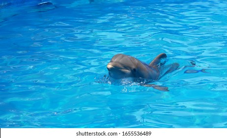 Close up of dolphin in its element