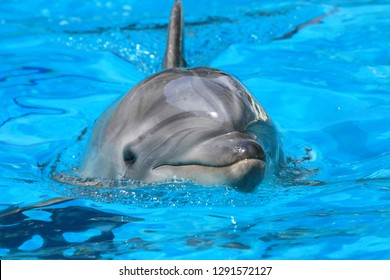 Close up dolphin in the water