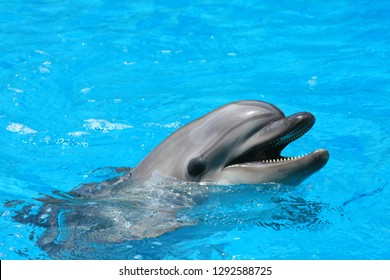 Close up of a dolphin in the water at dolphinarium