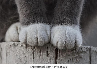 Close up of domestic cat paws on textured post
