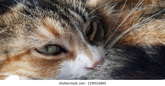 Close up of a domestic short hair tortoiseshell cats face.