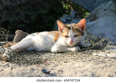 Close up of domestic Thai cat relaxing on the floor, selective focus