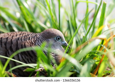 close up of dove with green nest