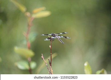 Close up of dragon fly on the tall grass