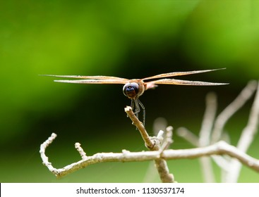 Close up of dragonfly on green background