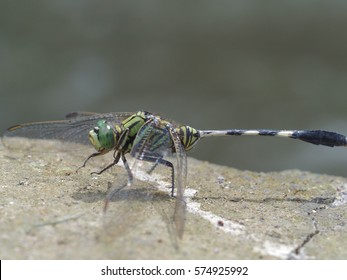 Close up of a Dragonfly on a natural background