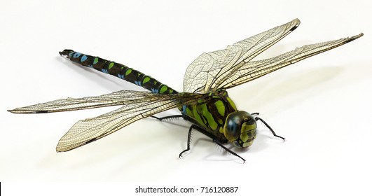 Close up Dragonfly on white background