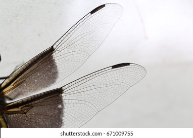 up close dragonfly wings