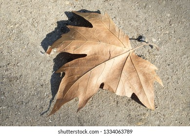 Close up of a dried out leaf on a sandy ground
