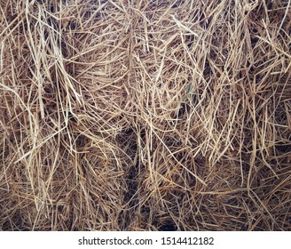 Close up of dried rice straw used for animal husbandry.
