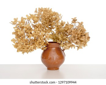 Close up of dry hydrangea flowers in a vase, isolated on white behind.