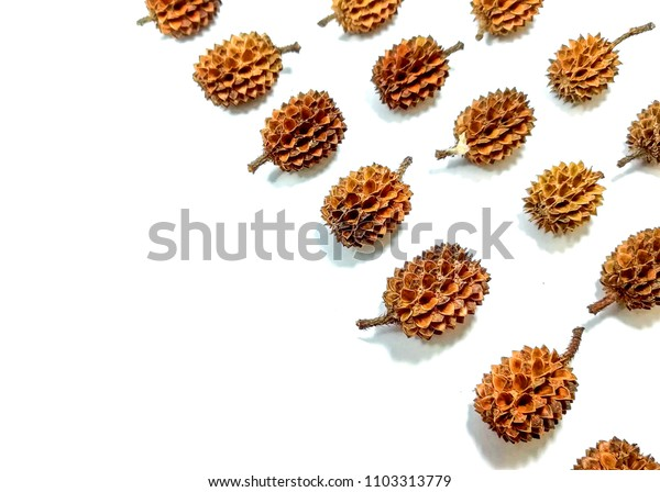 close up of dry pine cones from She oak (Common Ironwood) isolated on white background