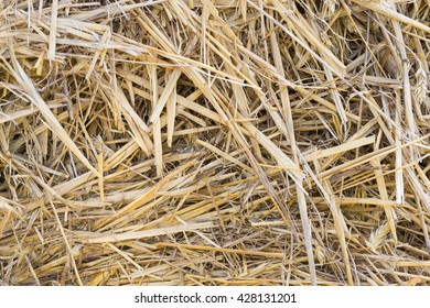 Close Up of Dry Straw Background Texture