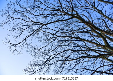 Close up dry tree branches with no leaves against blue sky